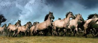 Oostvaardersplassen paarden